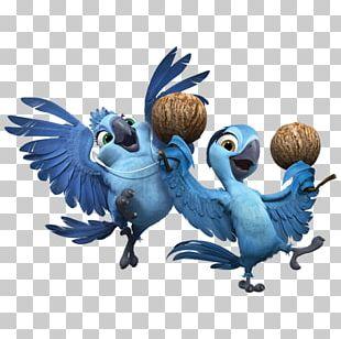 Parrot Wing Bird Of Prey Beak Illustration PNG