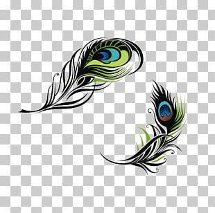 Bird Feather Peafowl Euclidean PNG
