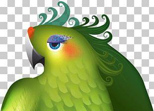 Macaw Love Birds Parrot Edinburgh Festival Fringe PNG