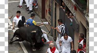 San Fermín Pamplona Running Of The Bulls Photography PNG