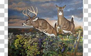 Elk White-tailed Deer Red Deer Reindeer PNG