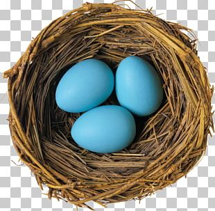 Bird Nest Bird Egg PNG