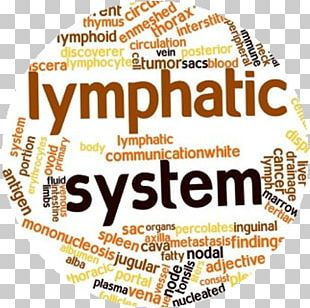 Lymphatic System Circulatory System Lymphatic Vessel Manual Lymphatic Drainage Lymph Node PNG