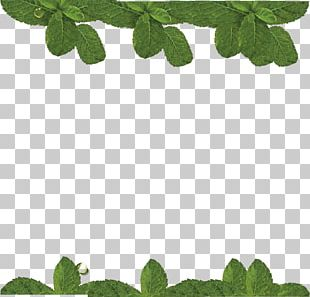 Water Mint Leaf PNG