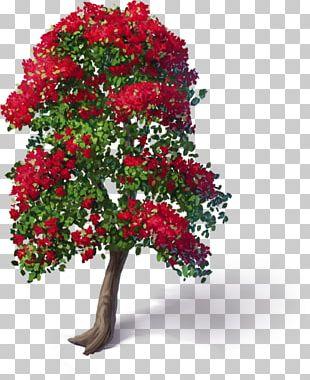 Cut Flowers Garden Roses Plant Floral Design PNG