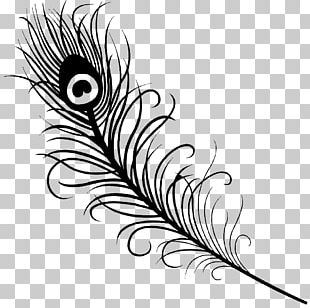 Feather Peafowl Drawing PNG