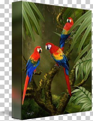 Macaw Loriini Beak Feather Fauna PNG
