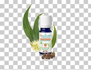 Essential Oil Eucalyptus Oil Lemon-scented Gum PNG