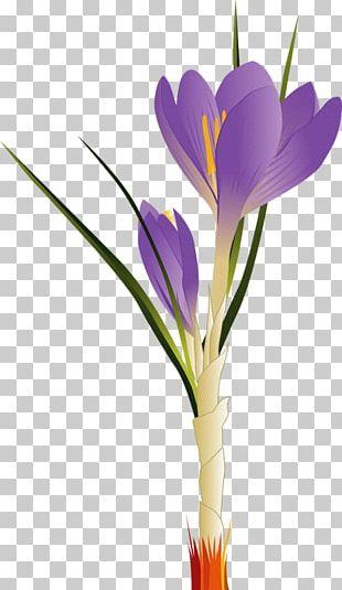 Tulip Flower PNG