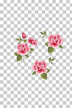 Garden Roses Beach Rose Pink Flower PNG