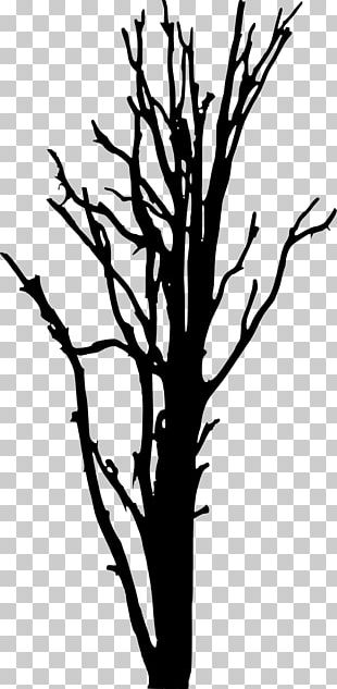 Woody Plant Tree Silhouette PNG