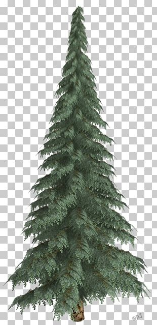 Spruce Pine Christmas Ornament Fir Christmas Tree PNG