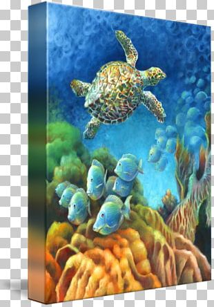 Loggerhead Sea Turtle Coral Reef Fish Underwater PNG
