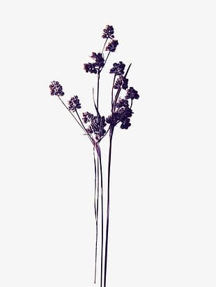 Purple Dried Flowers PNG