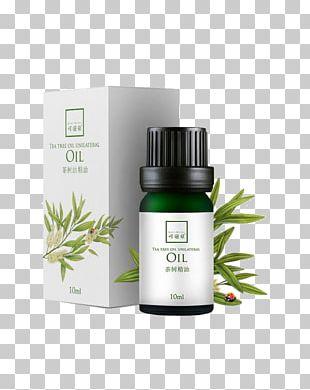 Tea Tree Oil Essential Oil Narrow-leaved Paperbark Cosmetics PNG