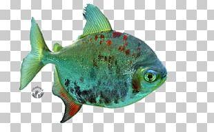 Desktop Freshwater Fish PNG