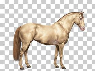 Mane Mustang American Paint Horse American Quarter Horse Stallion PNG