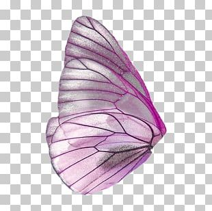 Butterfly Portable Network Graphics Fairy Wings PNG