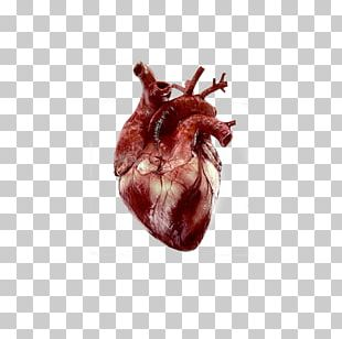 Heart Anatomy Human Body Giphy PNG