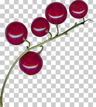 Magenta Purple Violet Fruit PNG