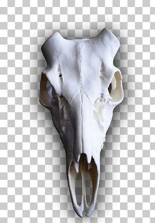 White-tailed Deer Elk Skull Mounts PNG