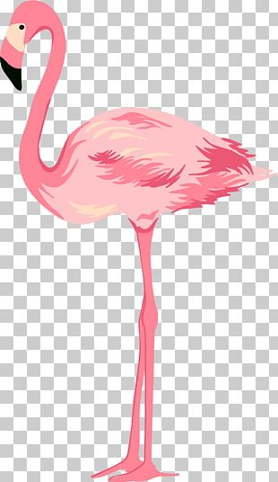 Cygnini Pink PNG