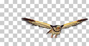 Eagle One Piece Devil Fruit Zoan PNG