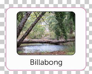 Bendigo Botanic Gardens Botanical Garden Public Garden PNG