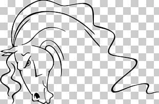 Horse Line Art Drawing PNG