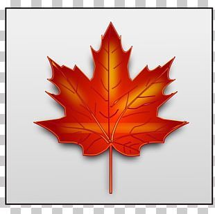 Japanese Maple Maple Leaf PNG