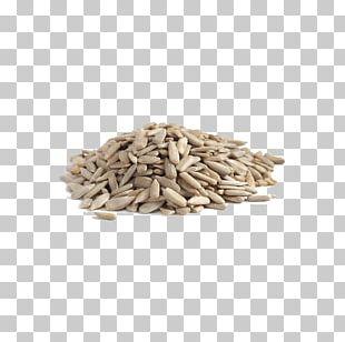 Common Sunflower Sunflower Seed Organic Food Pumpkin Seed PNG