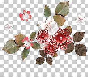 Blossom Floral Design Rose Family Flower Petal PNG