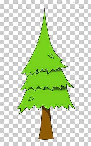 Pinus Palustris Tree PNG