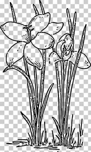 Rose Plant Black And White PNG