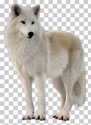 Alaskan Tundra Wolf Greenland Dog Canadian Eskimo Dog PNG