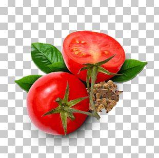 Bush Tomato Sodebo SA Food Antioxidant PNG