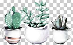 Cactaceae Succulent Plant Watercolor Painting Drawing Haworthia PNG