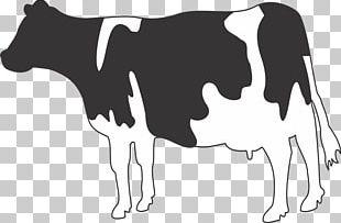 Jersey Cattle Holstein Friesian Cattle Belgian Blue Dairy Cattle Water Buffalo PNG