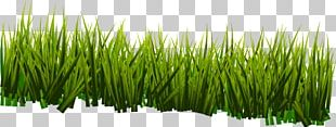 Vetiver Sweet Grass Commodity Wheatgrass Plant Stem PNG