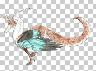 Beak Water Bird Wing Feather PNG