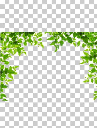 Borders And Frames Leaf Green PNG