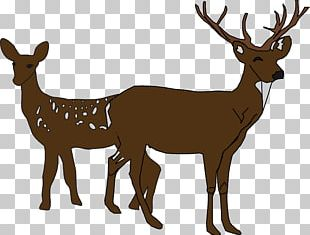 White-tailed Deer Silhouette PNG