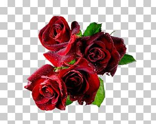 Valentine's Day Desktop Animation PNG