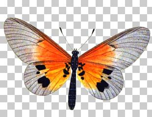 Butterfly Insect Clary Stock Photography PNG