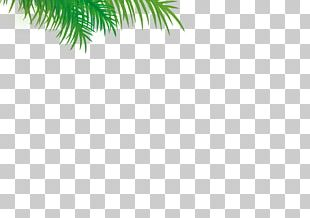 Evergreen Date Palm Leaf Pine PNG