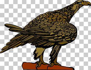 Eagle Vulture Hawk Beak Feather PNG