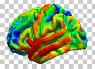Brain Organism PNG