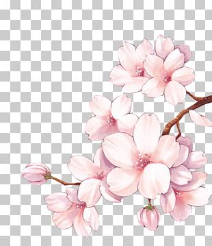Paper Cherry Blossom Watercolor Painting Flower PNG