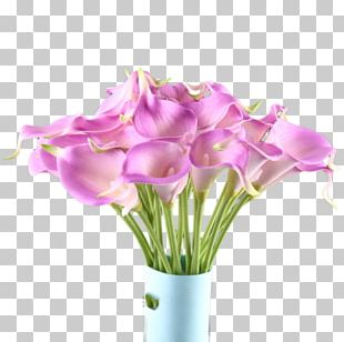 Flower Arum-lily PNG