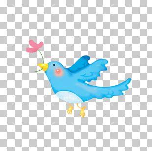 Bird Cartoon Child PNG